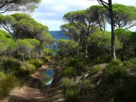 Reserva Natural Tombolo di Cecina